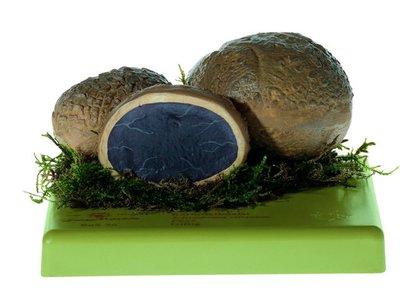 Aardappelbovist Somso BoS 56