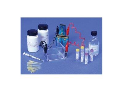 Elektroforese van DNA